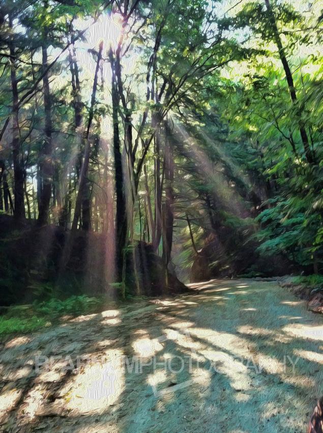 Sunbeams Dirt Road