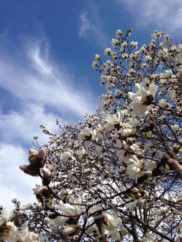 Spring Time Portland Maine