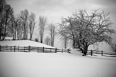 Black and White Vermont Winter