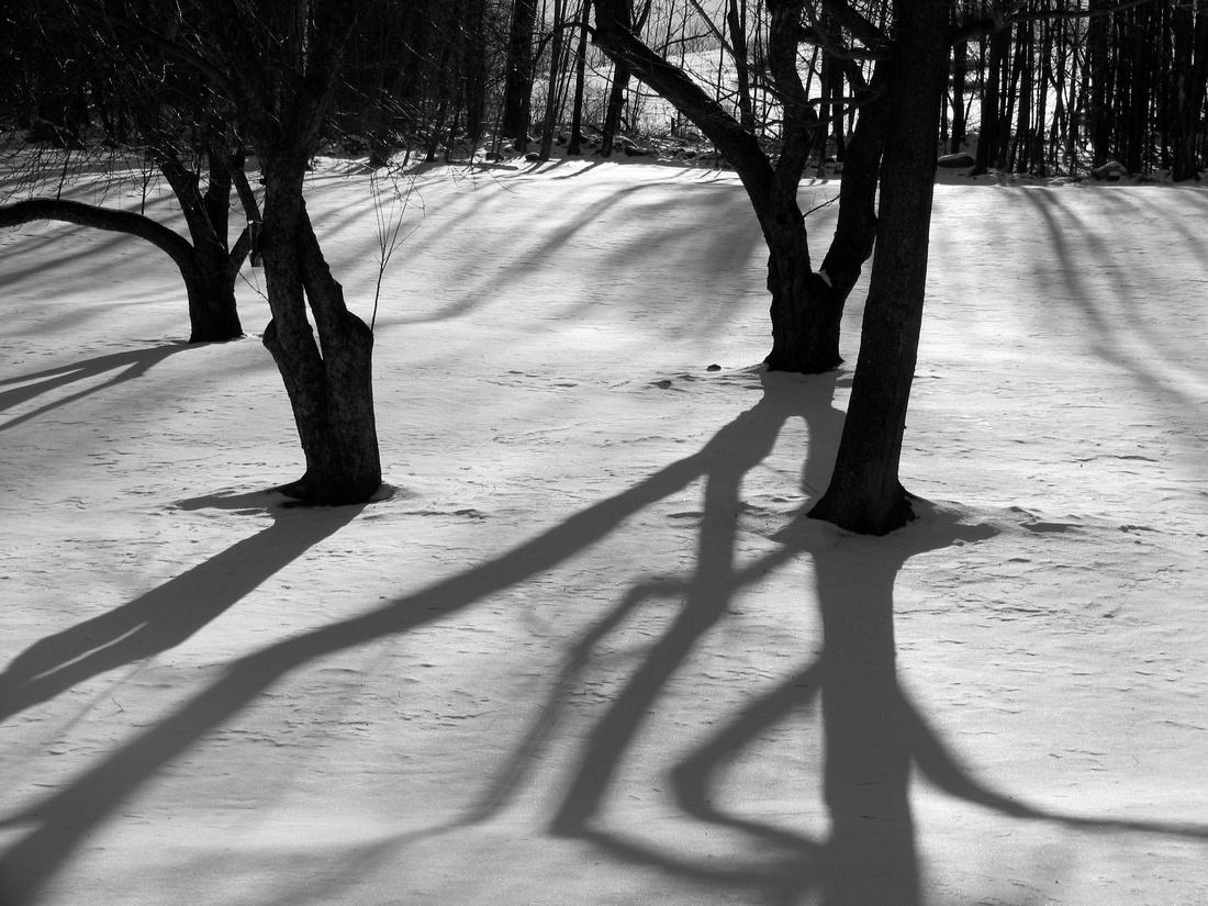 Shady Snow Trees